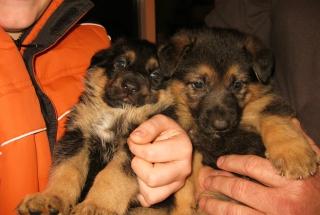 maia-sister-12-14-08